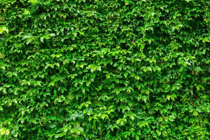 Ökologischer Messebau Pflanzenwand